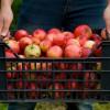 L'Autocueillette de Pommes en Outaouais