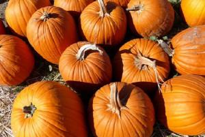 pumpkins-1326009