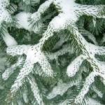 christmas-tree-2-1380975
